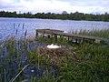 Nesting swan on Lurgan Park Lake. - geograph.org.uk - 1290372.jpg