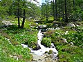 Nice river at the footpath to Lake Scluos - panoramio.jpg