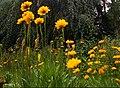 Nonsuch Park, Cheam, Surrey, London Borough of Sutton - Flickr - tonymonblat.jpg