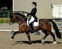 A reddish-brown horse at a trot, facing left, ridden by a woman in a black top hat, black tail coat, white breeches and tall black boots