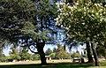 Northridge, Los Angeles, CA, USA - panoramio (17).jpg