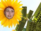 Nova as sunflower.jpg