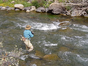 Nymphing The Gardner River, Yellowstone Nation...