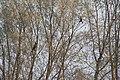 Oasi WWF cave di Noale - panoramio (3).jpg