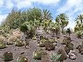 Oasis Park botanical garden - Fuerteventura - 02.jpg
