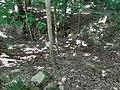 Oberrimbacher Erdfälle 202006 05.jpg