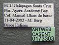Odontomachus bauri casent0173303 label 1.jpg