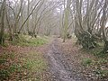 Old Road in Long Grove Plantation - geograph.org.uk - 110848.jpg