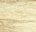 Old cement in yard - detail.jpg