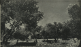 Olive of Choueifat - 1947.png