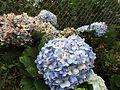 Ornamental plant in ooty.jpg