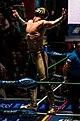 Oro Junior Lucha Libre.jpg