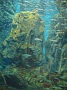 Osaka Aquarium fish school.jpg