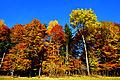 Ossiacher Tauern Herbstwald 01112009 77.jpg