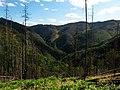 Ovde žive medvedi - panoramio.jpg