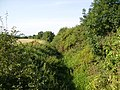 Overgrown watercourse next to Seamer Sewage Works - geograph.org.uk - 520899.jpg