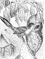 PSM V44 D617 The tailor bird and its nest.jpg