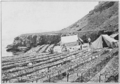 PSM V82 D542 Abalone drying at the clemente island japanese camp.png