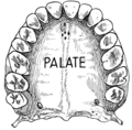 Palate 1 (PSF).png