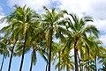 Palms & sky.jpg
