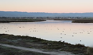 Palo Alto Baylands February 2013 005.jpg