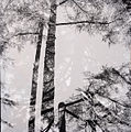 Paolo Monti - Serie fotografica - BEIC 6342478.jpg