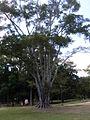 Parque del Este 2012 015.JPG