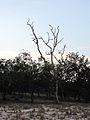 Parque nacional Aguaro-Guariquito 016.jpg