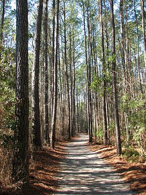 Goose Creek State Park - Image: Path Goose Creek SP NC 8597