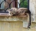 Pavlovsky Posad Kropotkina 36 cat 10.JPG