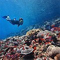 Penida-snorkeling.jpg