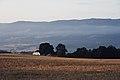 PermaLiv kornhøst 12-08-20 2.jpg