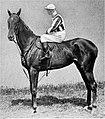 Perola (horse).jpg