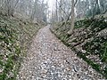 Petit chemin de sous bois - panoramio.jpg