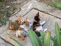 Petits chats, Alger, Algérie.jpg