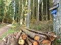 Pfad am Ferschweiler Plateau - geo.hlipp.de - 15175.jpg