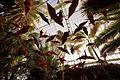 Phipps Conservatory 8.jpg