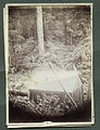 Photograph of A Cabin among Trees and Foliage - NARA - 7829551.jpg