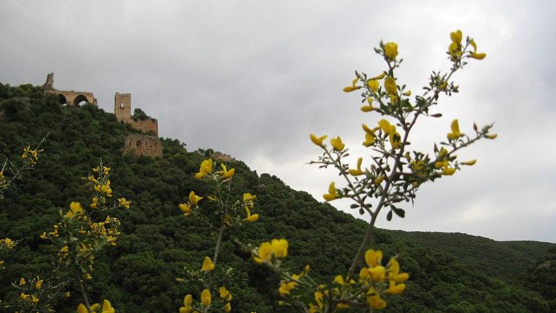 מבצר מונטפורט