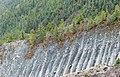 Pine trees - Annapurna Circuit, Nepal - panoramio.jpg