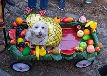 Pineapple dog (10733).jpg