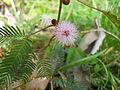 Pink flower - macro shot.jpeg