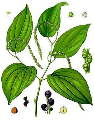 Black pepper - Pepper plant with immature peppercorns