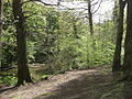 Plessey Woods Country Park - geograph.org.uk - 1314402.jpg