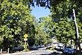 Podocarpus elatus Baldry street Chatswood.jpg
