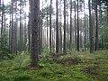 Poland. Gmina Jedwabno. Forests 010.JPG
