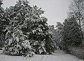 Poland. Konstancin-Jeziorna 201.JPG