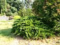 Poltava Botanical garden (13).jpg