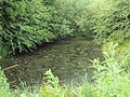 Pond near Delphfield, Runcorn - DSC06764.JPG