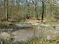 Pond near Wicket Nook - geograph.org.uk - 388980.jpg